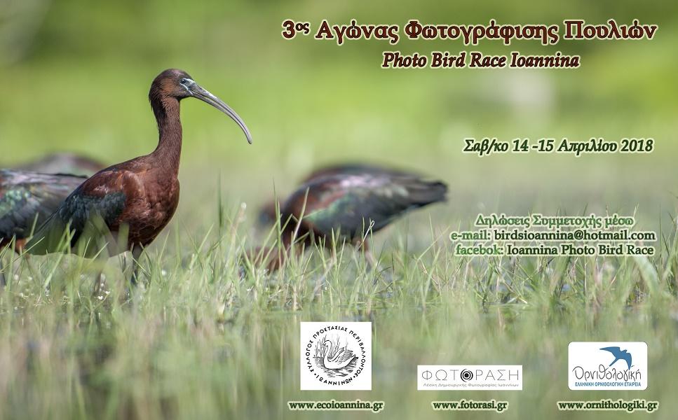 3rd-bird-race-poster